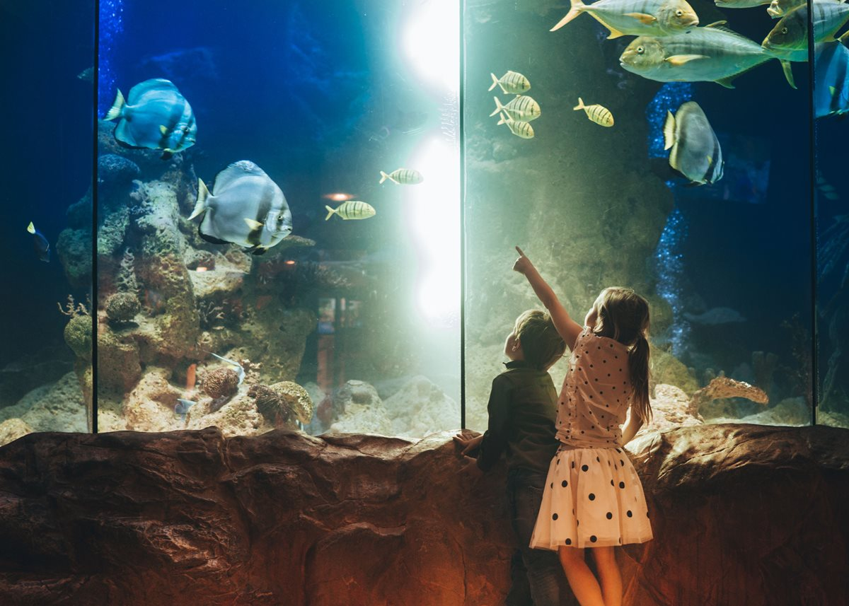 Kid-Friendly Museums for Traveling Families