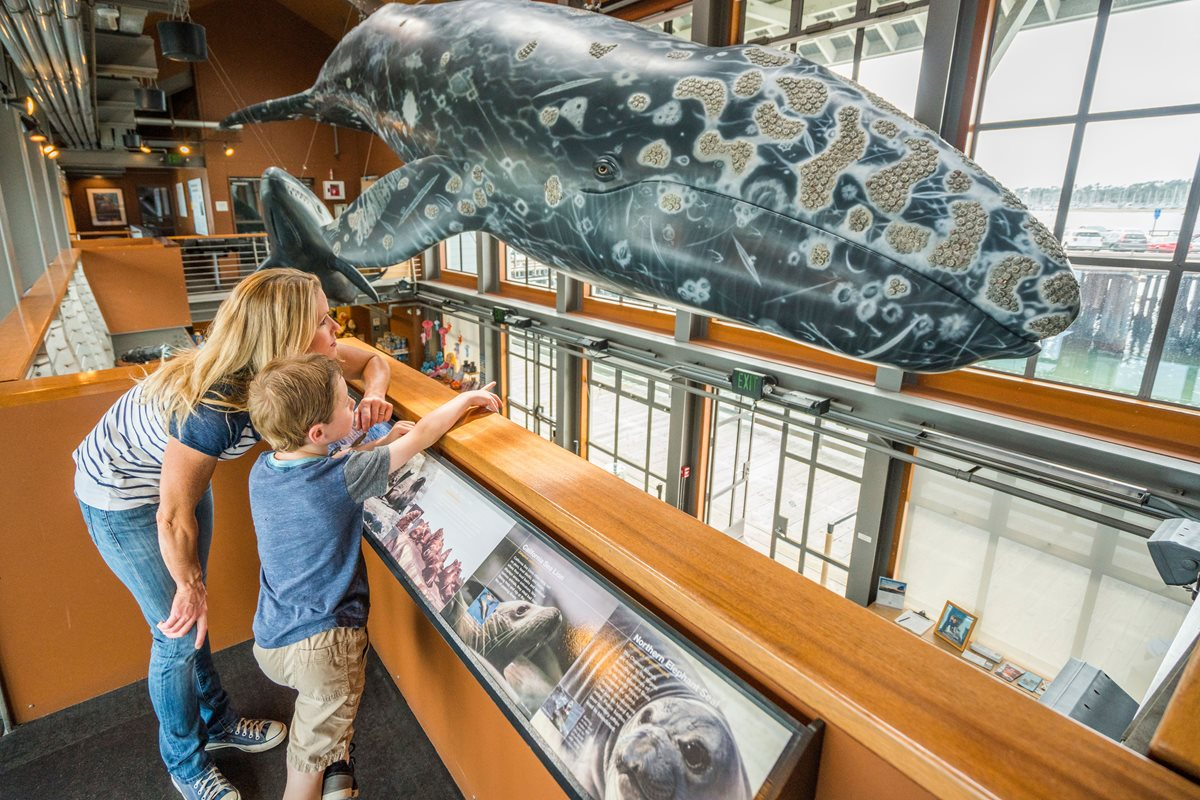 At the Santa Barbara Museum of Natural History, guests can explore the Mammal Hall, the planetarium, and several other kid-friendly exhibits.