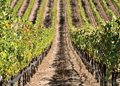 California's Finest: Santa Barbara Wine Country
