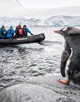 Penguin with kayak in the background